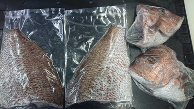 凍眠冷凍 三重県産養殖真鯛のフィーレ(頭の半割り付き)約2kgの鯛