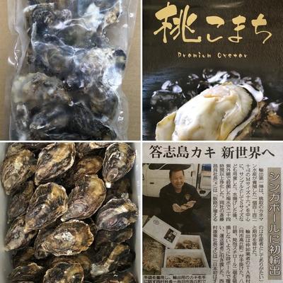 凍眠冷凍 生食用ブランド牡蠣 三重県産 桃こまち(殻付) 1kg ※Sサイズ1個50~80g