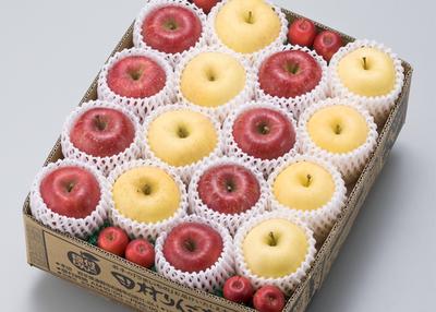 田村りんご店 旬のりんご・味くらべ【0020867】