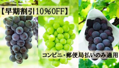 【早期割引10%OFF】ぶどう定期便(3便)