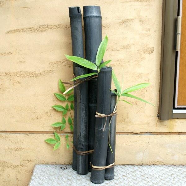 竹炭 50cm