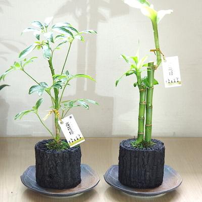 炭花壇 M 観葉植物 【2個セット】