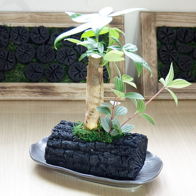 炭花壇 LH 観葉植物
