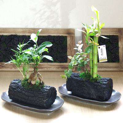 炭花壇 L 観葉植物