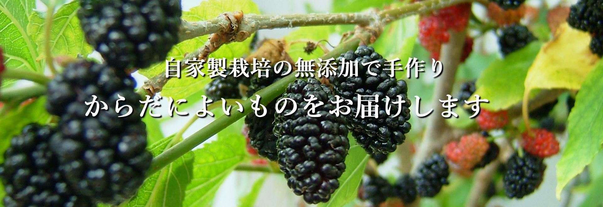 鳥取県北栄町 マルベリーコンポート・桑の葉茶・ドライいちじく