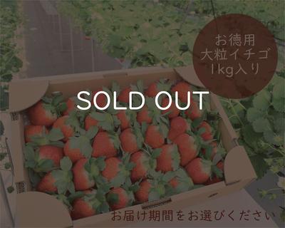 お徳用 大粒イチゴ(不揃い)1kg