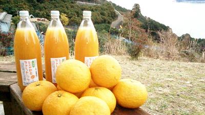 甘夏ジュース 0.18リットル瓶 48本入り