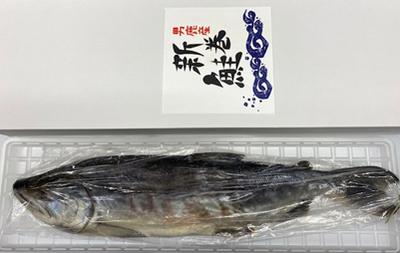 漁師手づくり昔ながらの味!新巻鮭(切ってない)約2.5㌔前後の大辛です。※塩辛さは個人の感覚で違う場合があります。