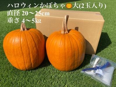 畠山正博 ハロウィン南瓜 観賞用 大サイズ2玉入