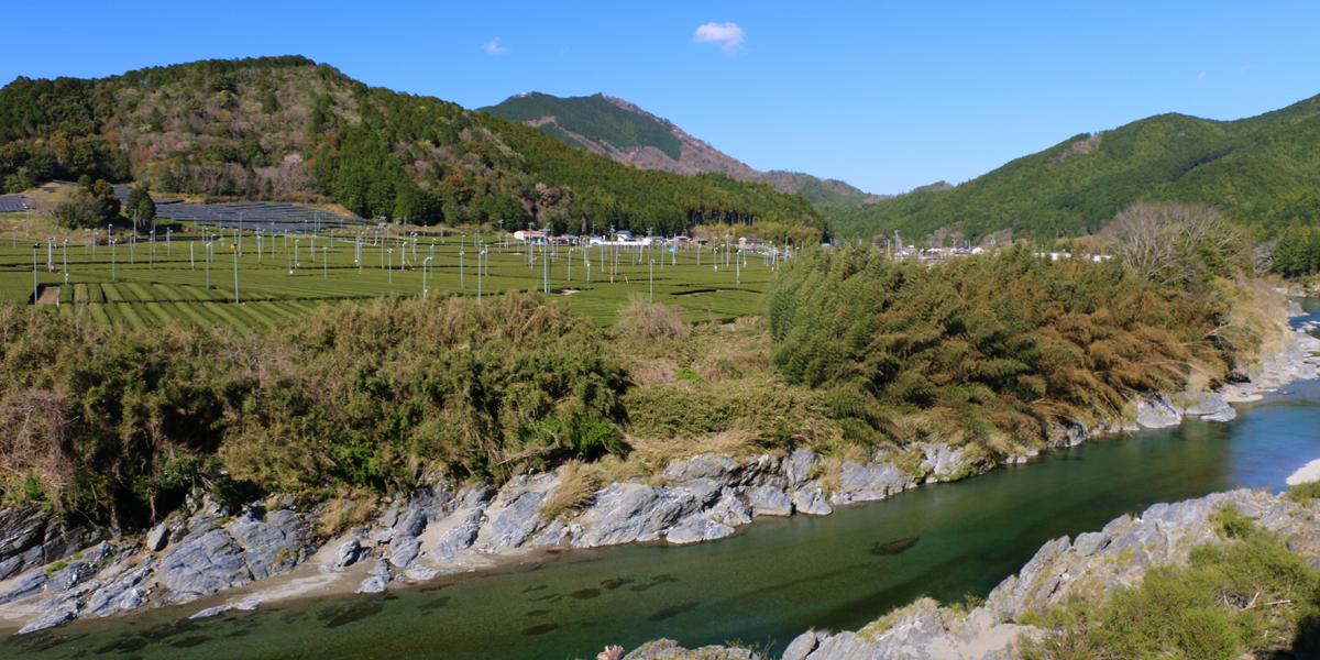 松阪市飯南町の櫛田川と茶畑