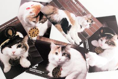 ニタマポストカード(写真バージョン)