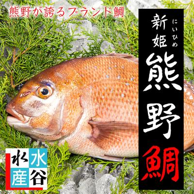 新姫 熊野鯛