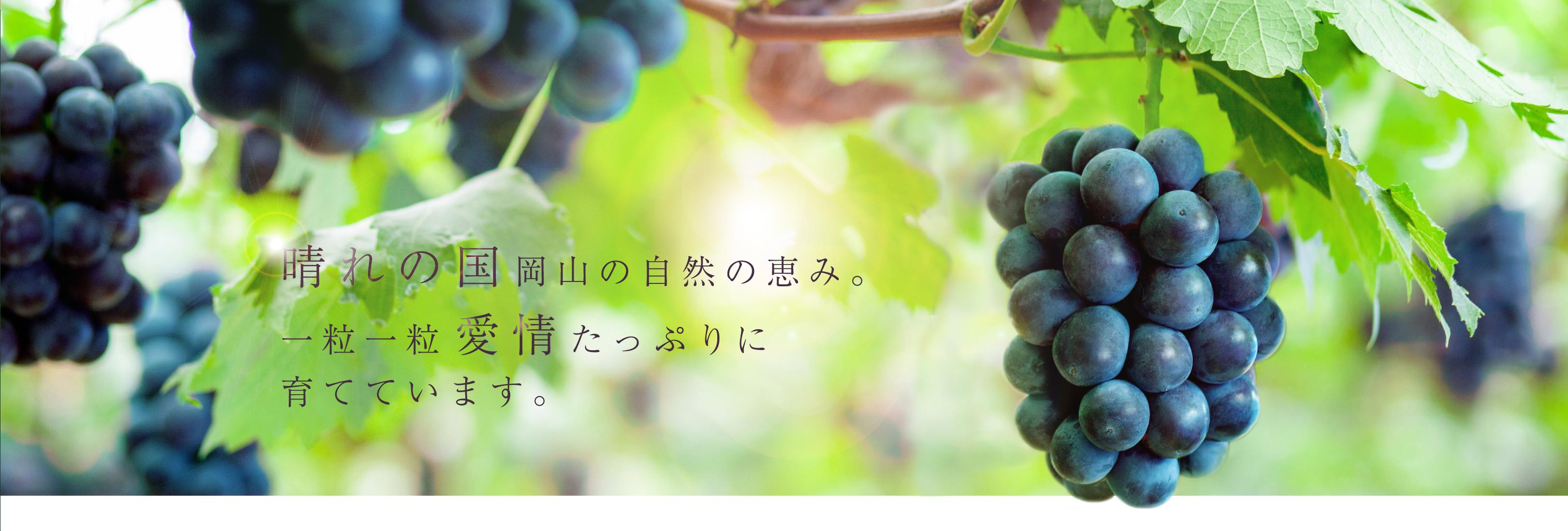 晴れの国岡山の自然の恵み。一粒一粒愛情たっぷりに育てています。