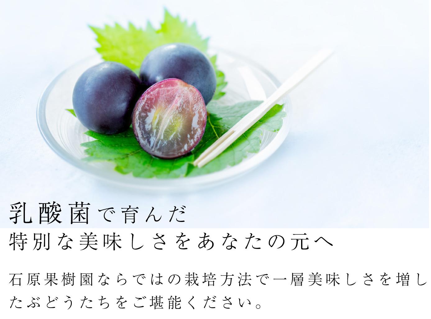 乳酸菌で育んだ特別な美味しさをあなたの元へ。石原果樹園ならではの栽培方法で一層美味しさを増したぶどうたちをご堪能ください。