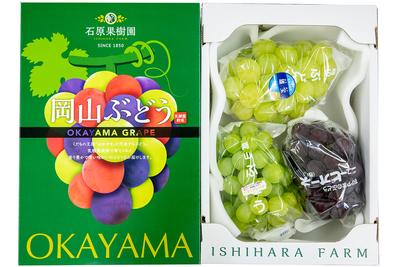 雄宝1房入り季節のぶどう詰合せ(2kg箱)