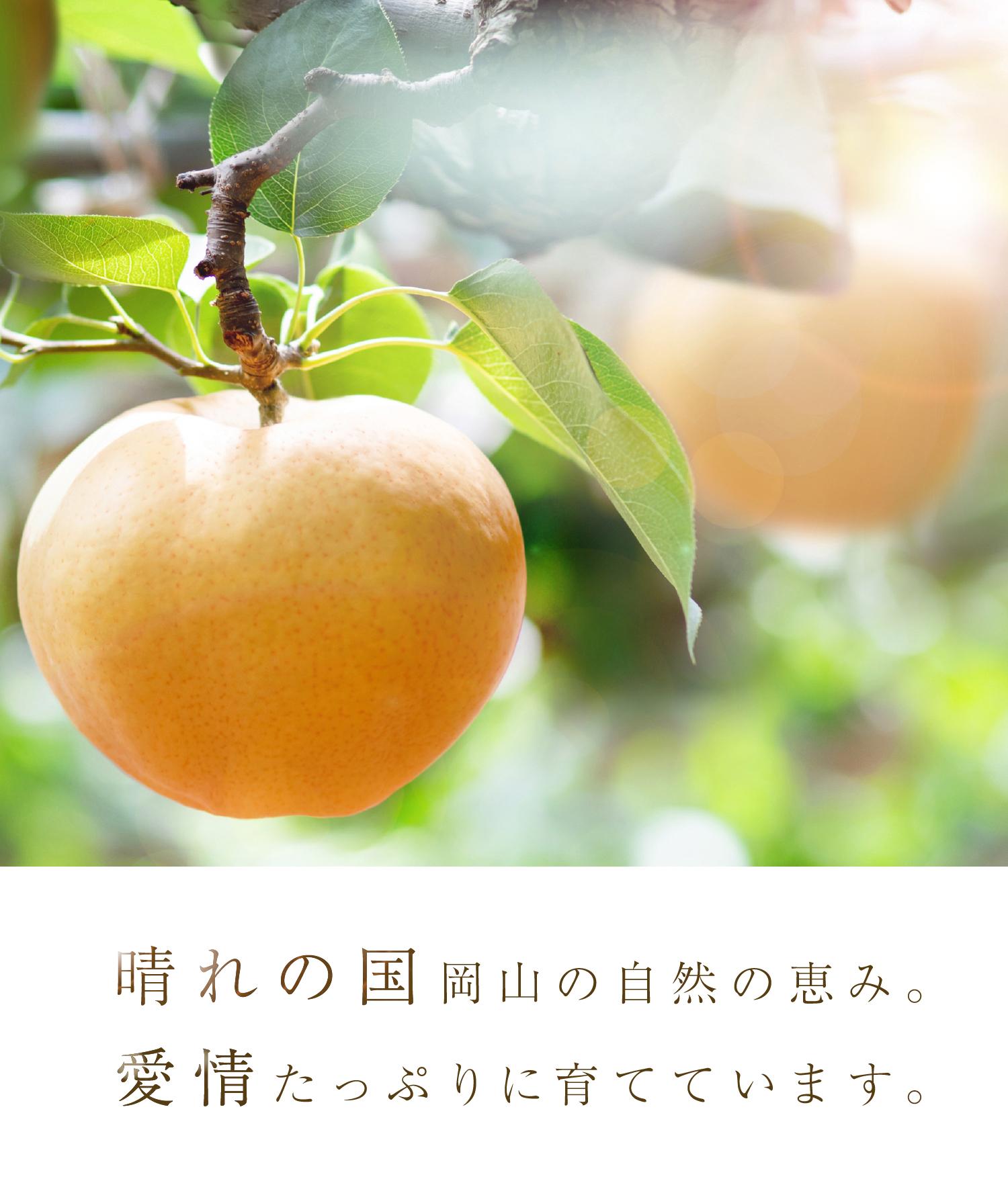 晴れの国岡山の自然の恵み。愛情たっぷりに育てています。