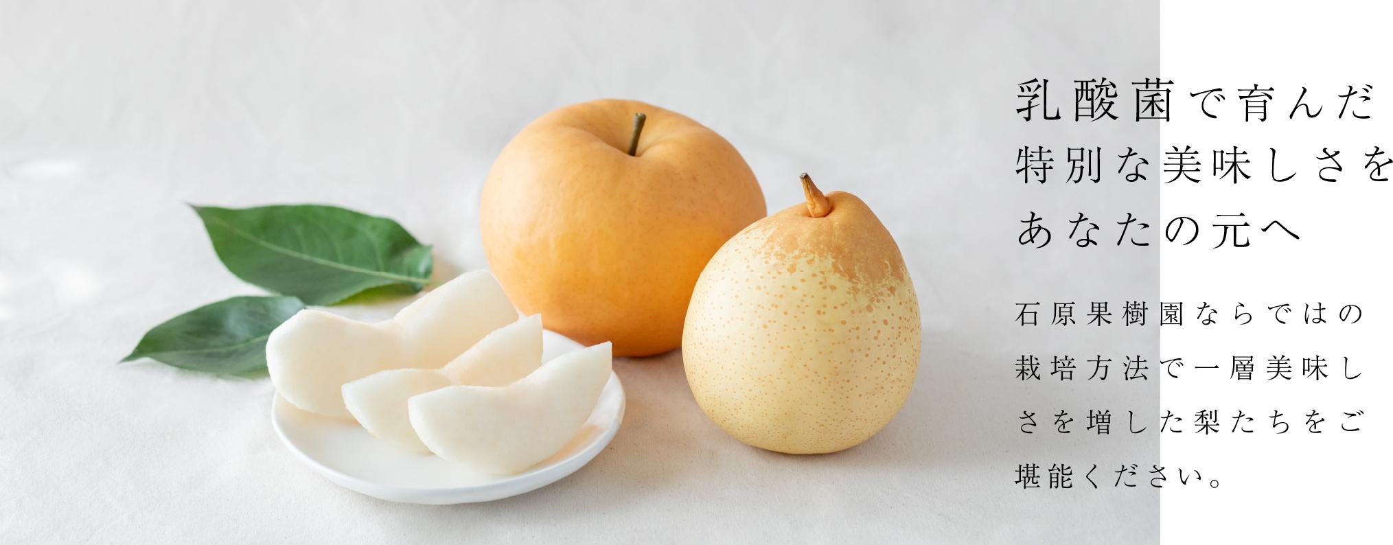 乳酸菌で育んだ特別な美味しさをあなたの元へ。石原果樹園ならではの栽培方法で一層美味しさを増した梨たちをご堪能ください。