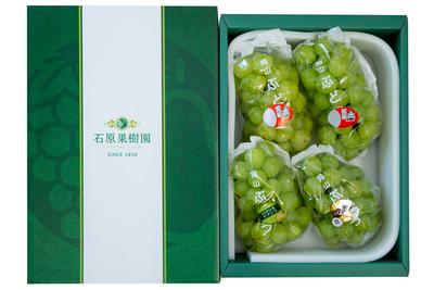 桃太郎ぶどう2房入り 詰合せ(3kg箱)