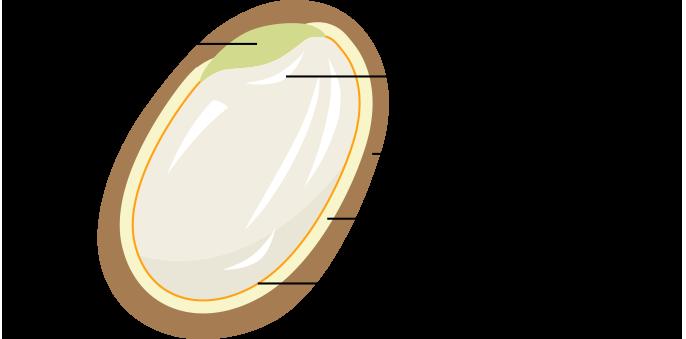 精米方法 玄米