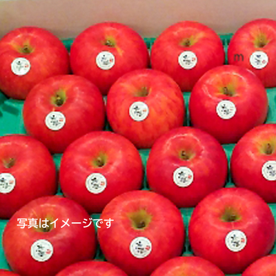 【雪室貯蔵】「雪っ子りんご《オンラインストア限定!》 恋桜」(3kg)