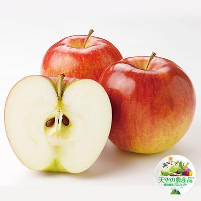 信州りんご「サンつがる」