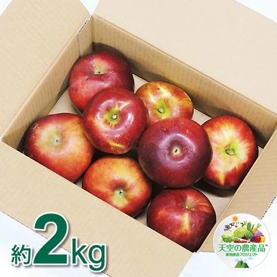 信州りんご 紅玉 Bランク品 2kg