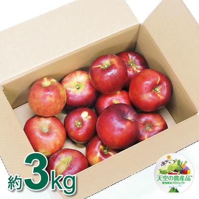 信州りんご 紅玉 Bランク品 3~5kg