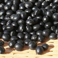 大粒北海道産黒豆(R1・光黒)30kg袋入