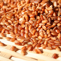 赤米(R1・群馬県産)30kg袋入
