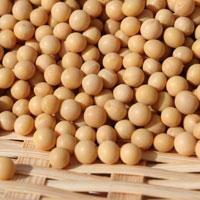 極小粒大豆スズマル(R1・北海道産)30kg袋入