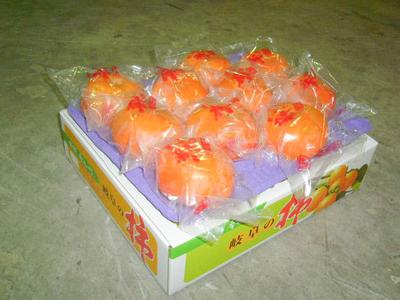 冷蔵富有柿 -  3L (1段10ケ) 贈答用