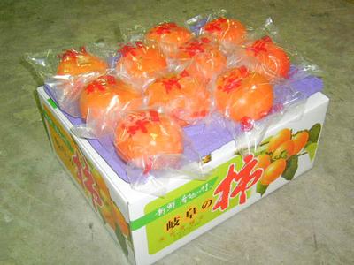 冷蔵富有柿 - 3L (2段20ケ) 贈答用