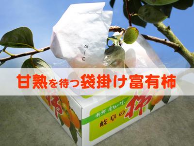 袋掛け富有柿 -  4L(1段9ケ) 贈答用